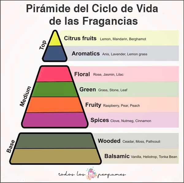pirámide del ciclo de vida de las Fragancias - todos los perfumes