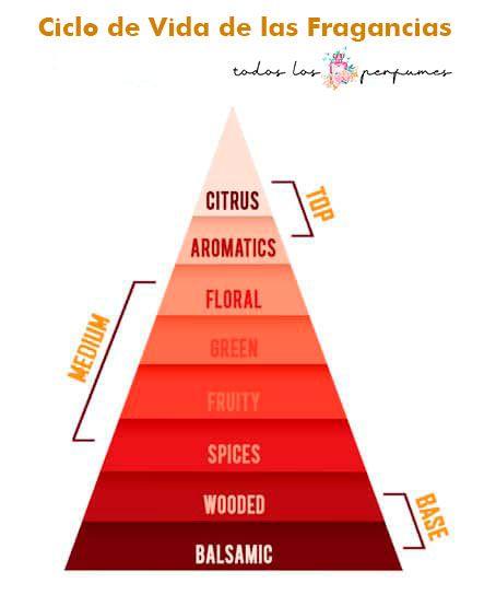 ciclo de vida de las fragancis y los perfumes